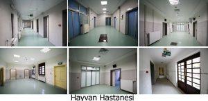 veteriner fak-hayvan hastanesi1